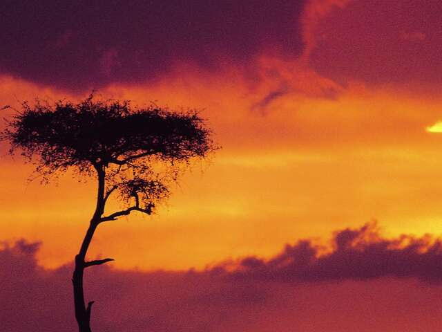 African Safari Adventure Summer 2019