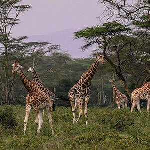 On Safari in Kenya with Amboseli