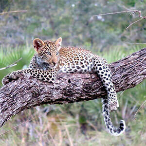 Tanzania: The Serengeti & Beyond with Serengeti Extended Stay