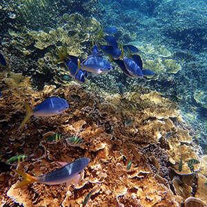 Across Australia by Train with Fiji & the Great Barrier Reef