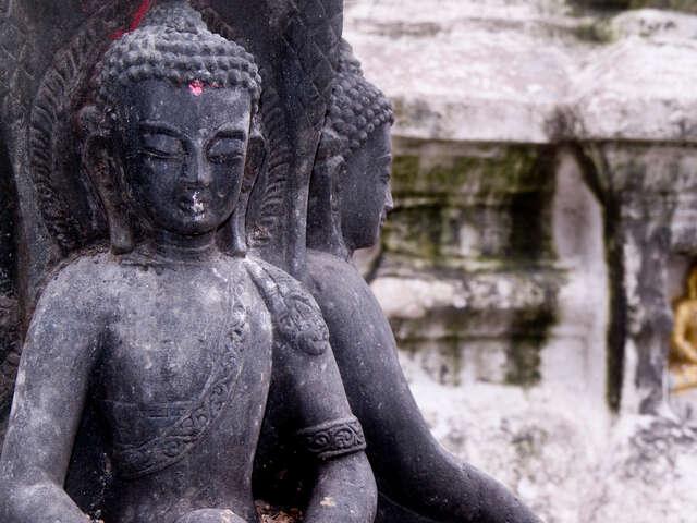 Wellness Nepal