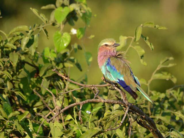 Botswana & Zimbabwe Safari