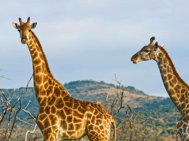 Kenya Overland Adventure