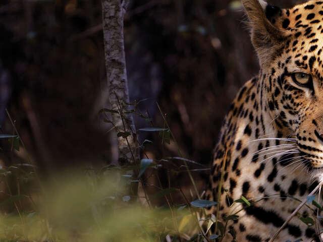 Kruger Camping Safari