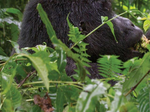 Wild Encounters in Rwanda