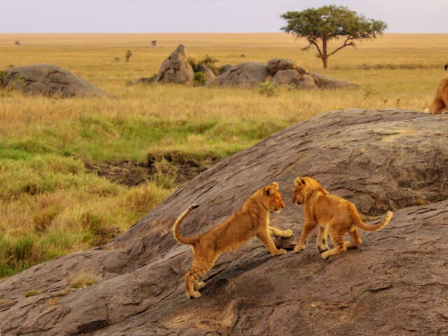 East Africa Overland: Serengeti & Safari Drives