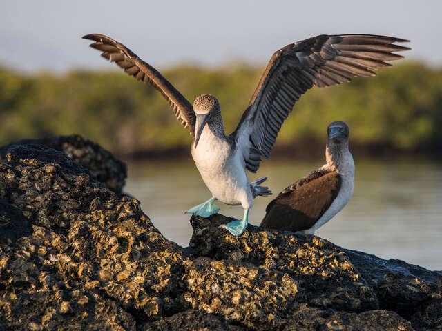 Galápagos Express Adventure: Wilderness & Wildlife