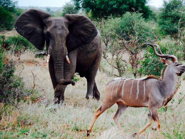 Kruger & Victoria Falls Upgraded Adventure
